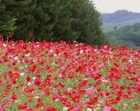 Wild Flowers Royalty Free Stock Image