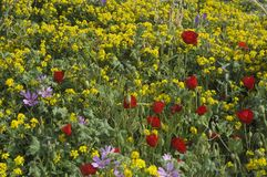 Wild flowers Stock Image