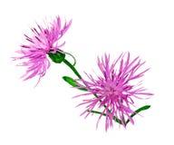 Wild flowers Stock Photos