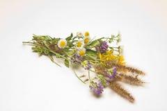 Free Wild Flowers Royalty Free Stock Image - 6825666
