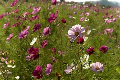Wild flowers. Wild flower in a large field Stock Image