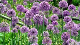 Wild flowers. In bloom stock photos