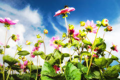Wild flowers against blue sky Royalty Free Stock Image
