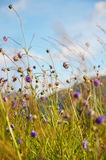 Wild flowers against the blue sky. Purple wild flowers against the blue sky in sunny day Stock Photography