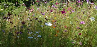 Wild flowers in all colors in the tall grass. Beautiful wild flowers in the tall grass Stock Photo