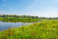 Wild flowers along a lake in summer Stock Photo