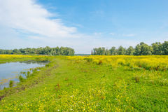 Wild flowers along a lake in summer Royalty Free Stock Photo