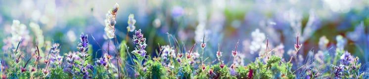 Free Wild Flowers And Grass Closeup, Horizontal Panorama Photo Stock Photography - 146645712