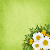 Wild flowers arrangement and frame Royalty Free Stock Images