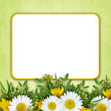 Wild flowers arrangement and frame Stock Image