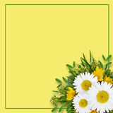 Wild flowers arrangement and frame Royalty Free Stock Image