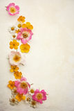 Wild flowers as a frame. On a slight grunge textured background Stock Photos