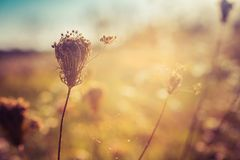 Wild flowers on autumn meadow. Selective focus royalty free stock photo