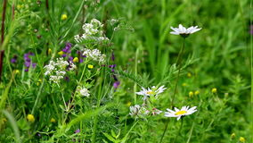 Wild flowers background. Generic view of various field flowers for nature backgrounds stock footage