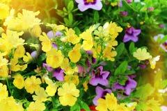 Wild flowers background Stock Photos