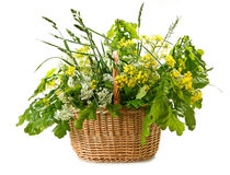 Wild flowers in basket Royalty Free Stock Images