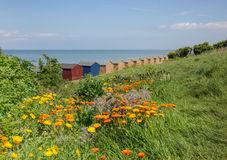 Wild flowers and beach huts in Whitstable. Wild yellow and orange flowers in the long grass in front of beach huts in Whitstable, Kent, uk Royalty Free Stock Photography