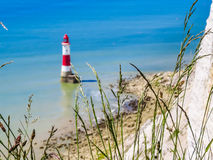 Wild flowers and Beachy Head Lighthouse, Eastbourne, East Sussex, England. Wild flowers and Beachy Head Lighthouse as blured background. Eastbourne, East Sussex stock images
