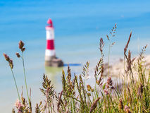 Wild flowers and Beachy Head Lighthouse, Eastbourne, East Sussex, England Royalty Free Stock Images