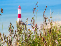 Wild flowers and Beachy Head Lighthouse, Eastbourne, East Sussex, England Stock Photography