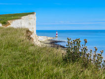 Wild flowers and Beachy Head Lighthouse, Eastbourne, East Sussex, England Royalty Free Stock Photos