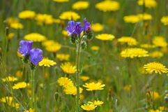 Wild Flowers. Beautiful wild flowers in the field Stock Images