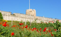 Wild flowers below Saint Nicholas Castle Royalty Free Stock Photos