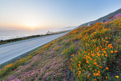 Wild flowers in Big Sur Stock Photography