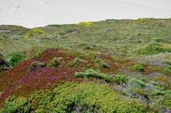 Wild Flowers, Big Sur, California, USA royalty free stock photos