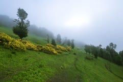 Wild flowers bloom in a fog enshrouded meadow. stock photos