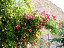 Wild flowers are blooming along the gate during summer time. royalty free stock photography