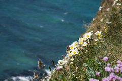 Wild flowers blooming on the cliff over the ocean Stock Images