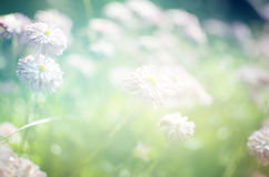 Wild  Flowers Blooming. Stock Photo