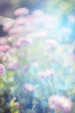 Wild  Flowers Blooming. Stock Photography