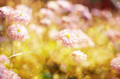 Wild  Flowers Blooming. Royalty Free Stock Photos
