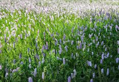 Wild flowers blooming in the field Stock Photo
