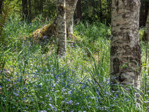 Wild flowers blooming in the forest Royalty Free Stock Image