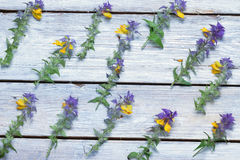 Wild flowers on the boards.background.view Royalty Free Stock Image