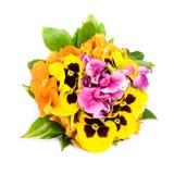 Wild flowers bouquet. Stock Image