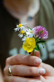 Wild flowers bouquet Royalty Free Stock Images