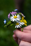 Wild flowers bouquet. Closeup image of a small bouquet of wild flowers being offered Royalty Free Stock Image