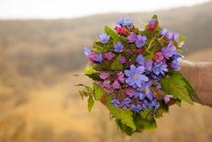 Wild flowers bouquet Stock Images