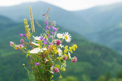 Wild flowers bouquet over mountains. Stock Image
