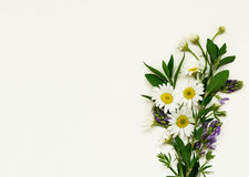 Wild flowers bouquet on white paper background Royalty Free Stock Photos