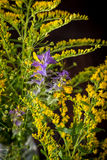 Wild flowers in a bouquet Stock Photos
