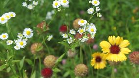 Wild flowers stock footage