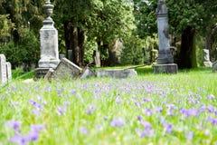 Wild flowers with broken gravestone. Broken tombstone with purple wild flowers growing around it Royalty Free Stock Photography