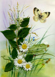 Wild flowers and a butterfly. Beautiful Stock Photo