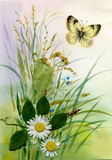 Wild flowers and a butterfly. Beautiful watercolor Stock Images