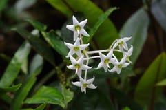 Wild flowers of Cameron Highland Stock Image